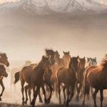 Doğadaki Vahşi Atlar