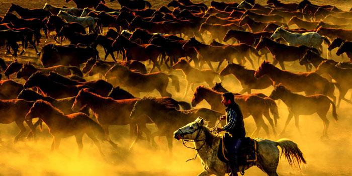 Yılkı Atları Görüntüsü